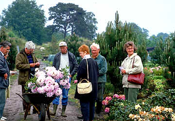 Our group visits the nursery of Mr. Dürre in Linswege in northern Germany, 1993
