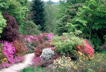 Wickworth Arboretum, also South-England