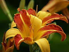 not only rhodos and azaleas, but also daylilies,  grasses, ferns, perennials etc. give an appearance