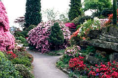 'Leonardslee Gardens' in South--England, very beautiful