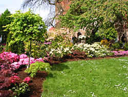 'Rhodo-Days' in Westerstede in northern Germany, the whole city filled with rhodos and azaleas