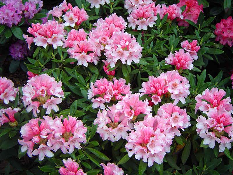 Fotos de mercado de flores 7